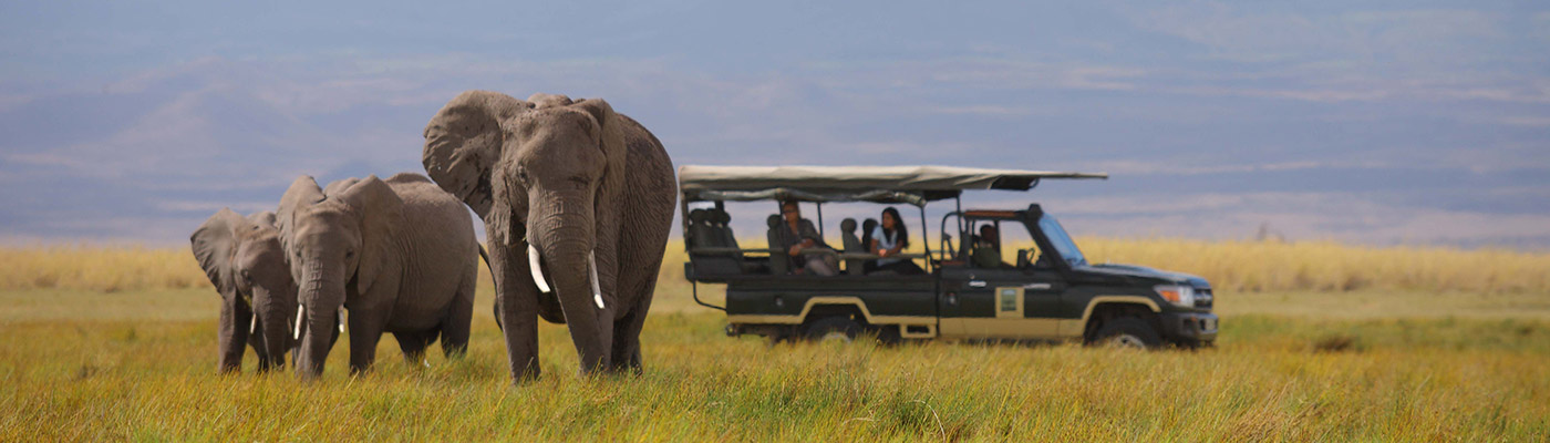 Safari people watching elephants from a 4x4 - a slider image for JD Specialized Recruitment South Africa's Home age.